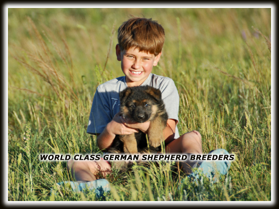 German shepherd breeders, World class German Shepherd breeders