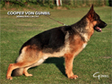 German Shepherd Breeders in Colorado Gunbil German Shepherds